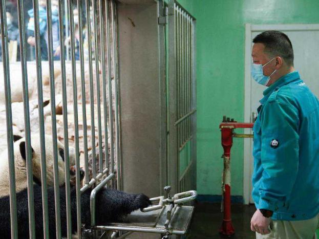 Feeder of giant pandas in Beijing