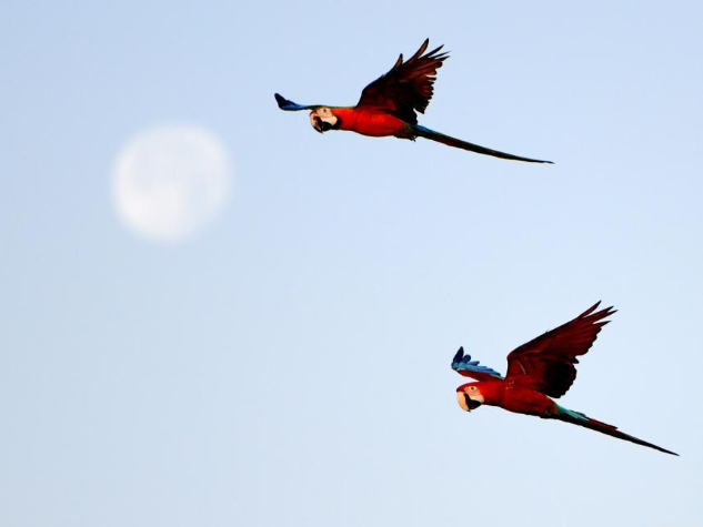 Parrots seen during training show in Capital Governorate, Kuwait