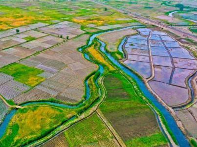 Beautiful rice paddies under China's Qilian Mountains