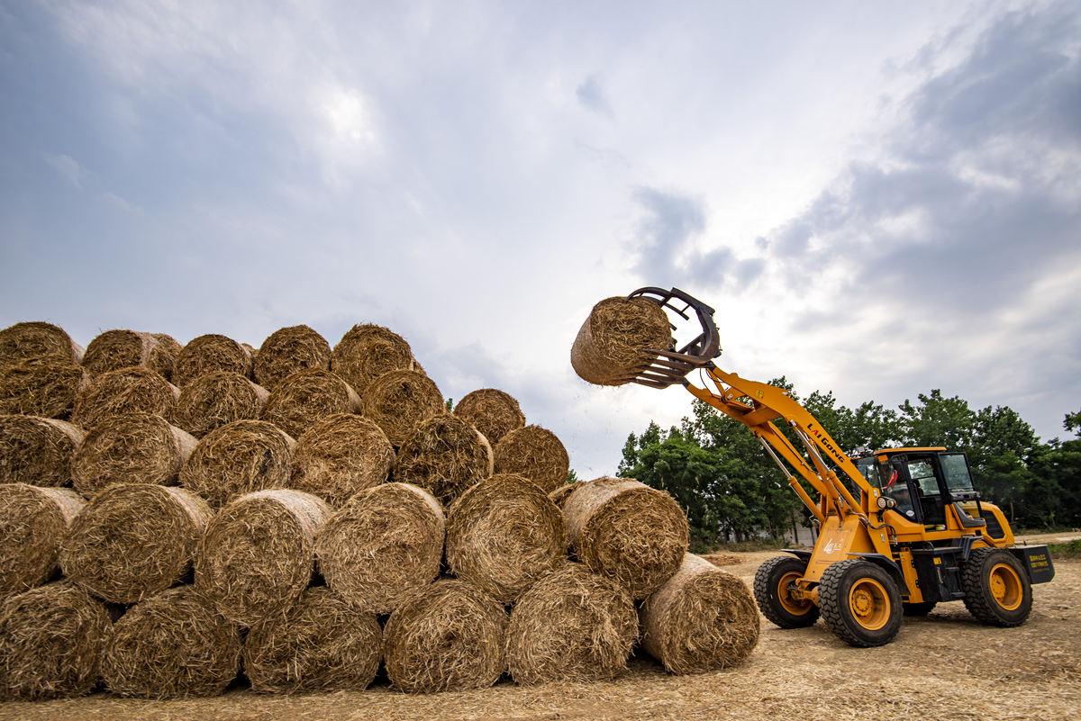 Wheat straw recycling converts waste into organic treasure