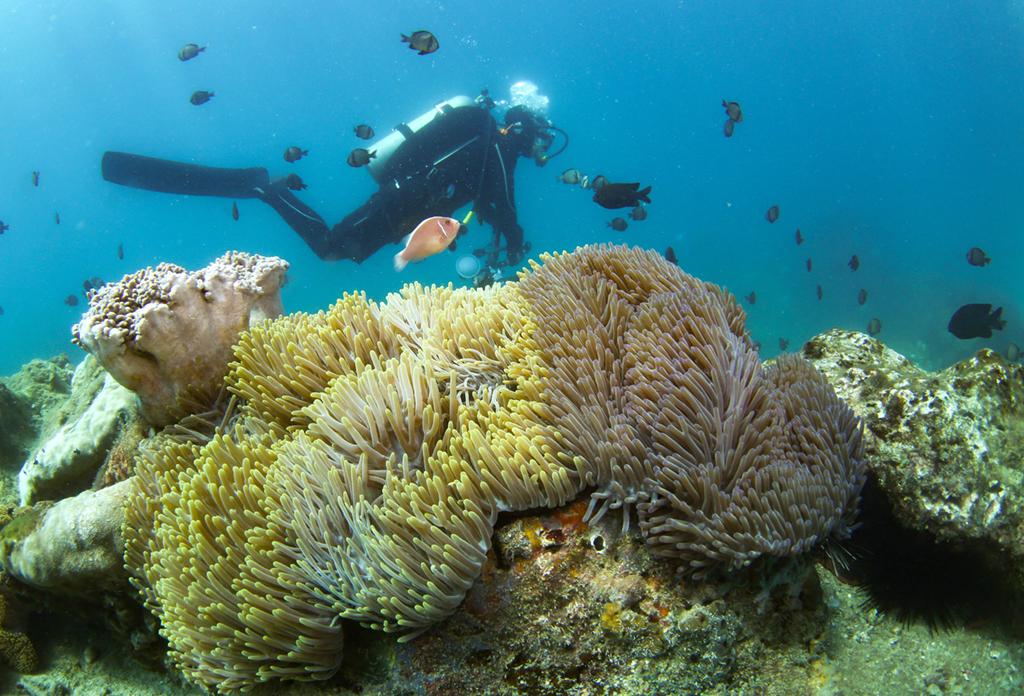 Underwater world of Wuzhizhou in South China
