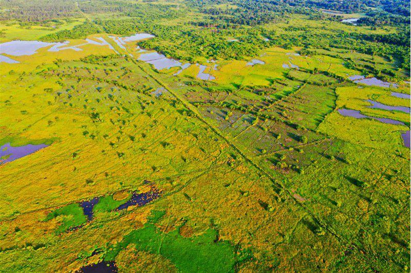 Wetland protects ecology of Haikou, south China's Hainan