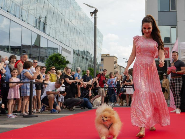 Dogs on the Red Carpet fashion show held in Budapest