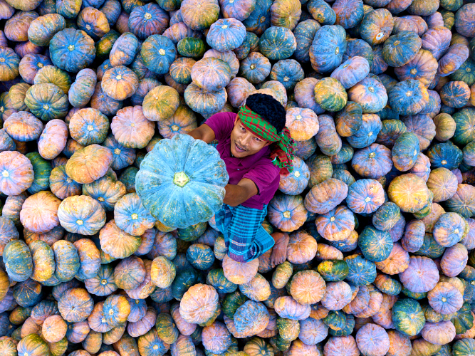 Colorful harvest in Bangladesh