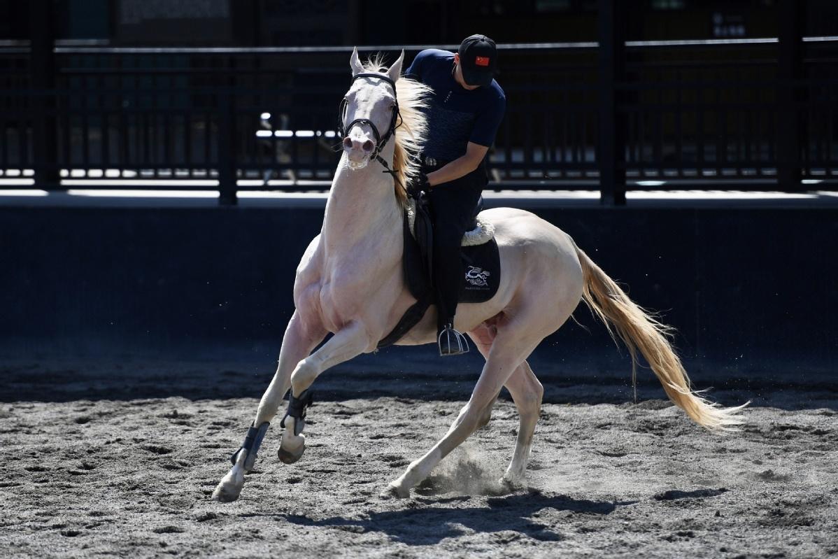 Xinjiang park showcases its beautiful horses