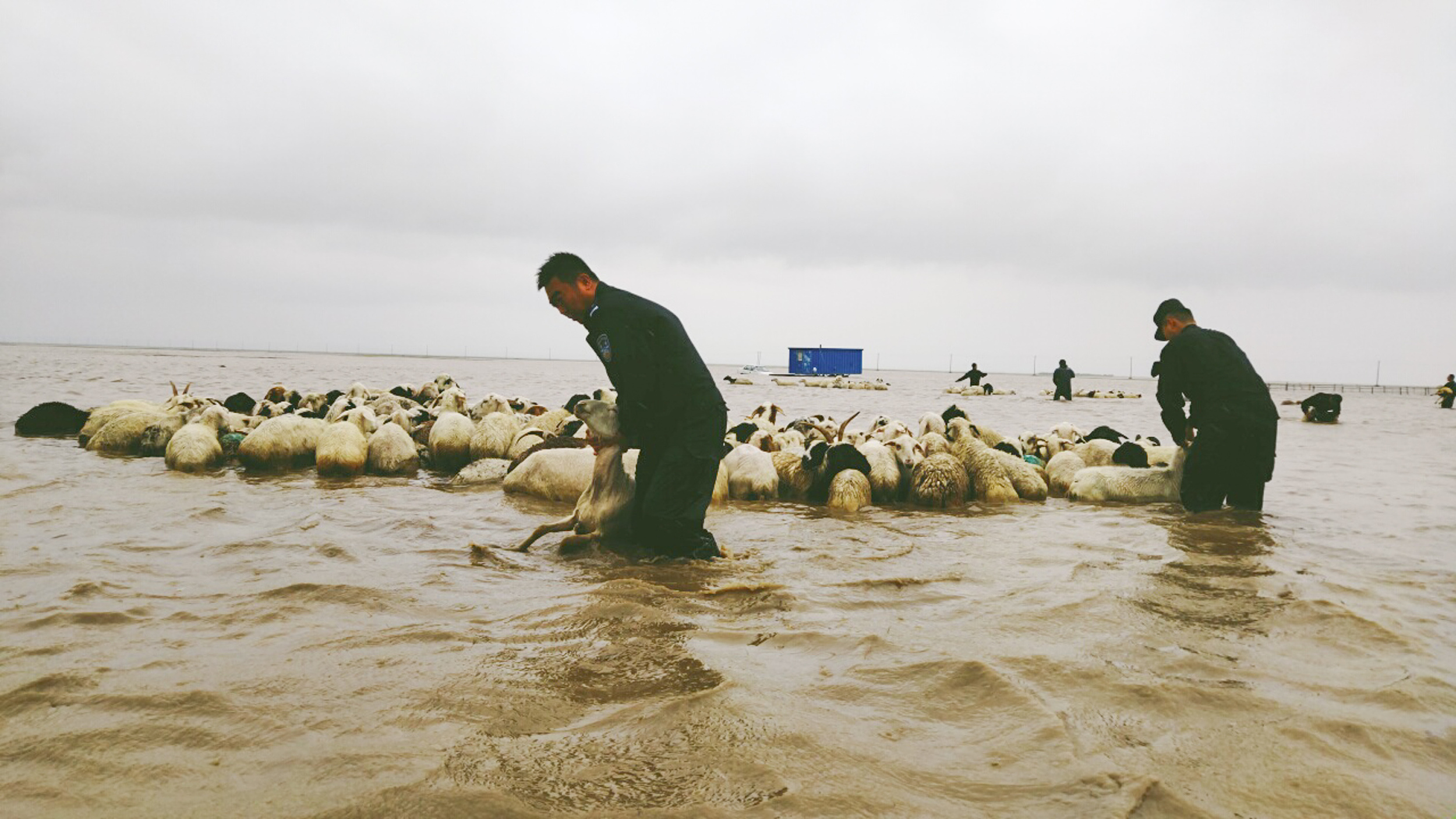 Thousands of sheep rescued in North China's Inner Mongolia
