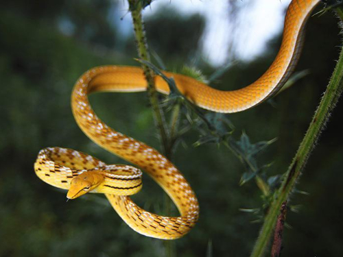 In pics: various species of colorful snakes in Yunnan