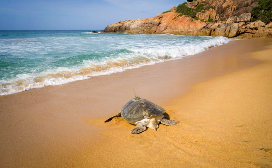 Turtles released back into sea in Hainan