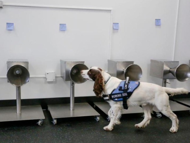 COVID-19 detection dogs trained in Canada
