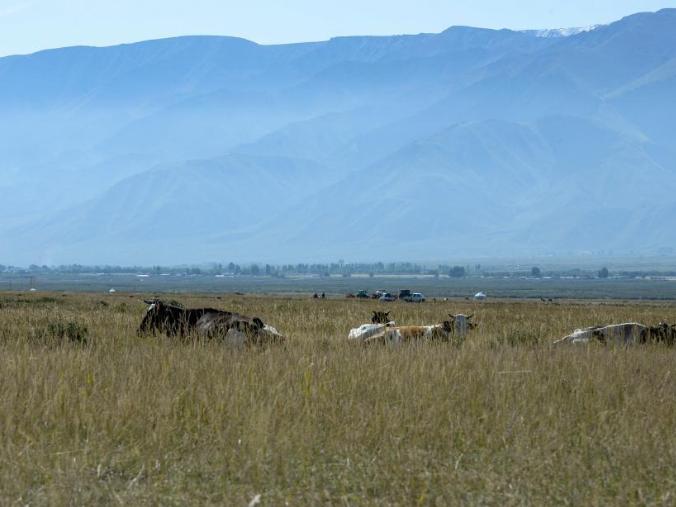 Herdsmen prepare winter food for livestock in Xinjiang