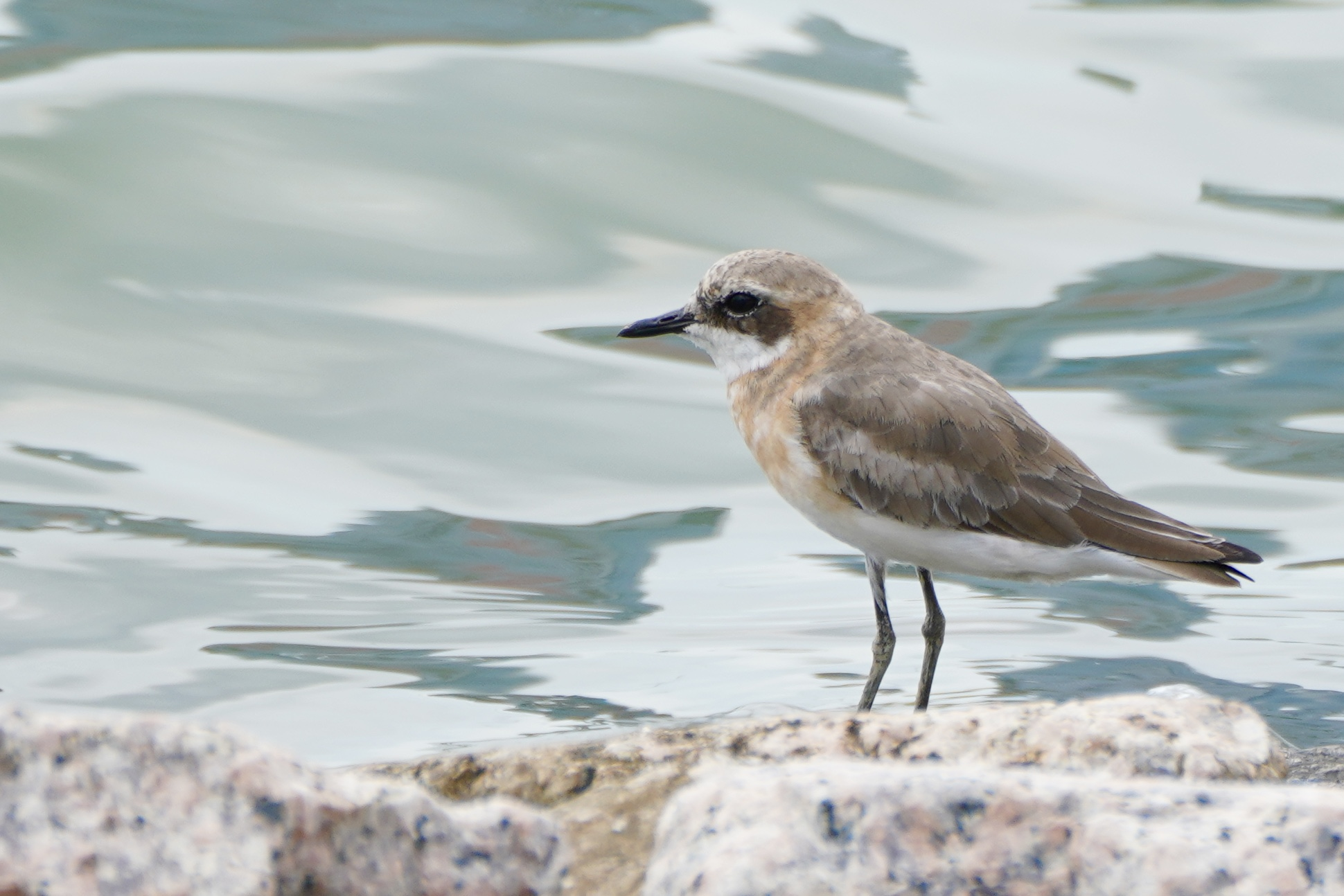 Spearhead migratory birds reach S China's Shenzhen