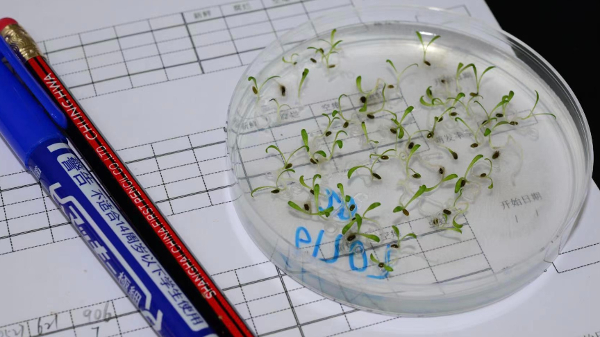Live: See a seed germination experiment in Yunnan