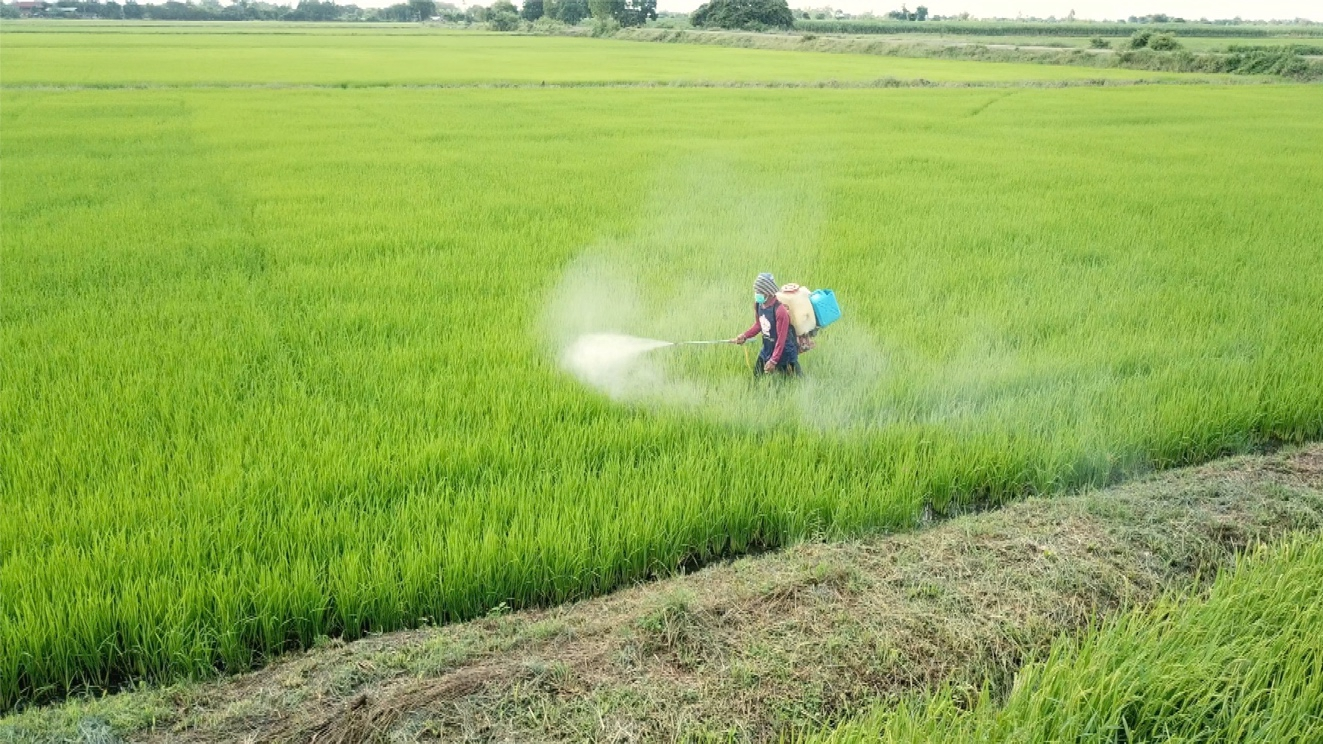 Thailand's reliance on pesticides reveals dangers of foods