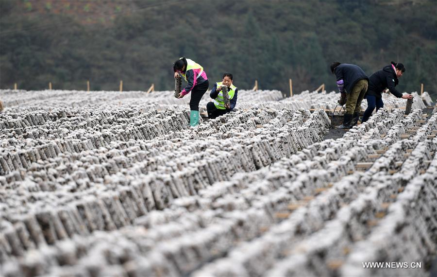 Chinese farmers busy working in early spring