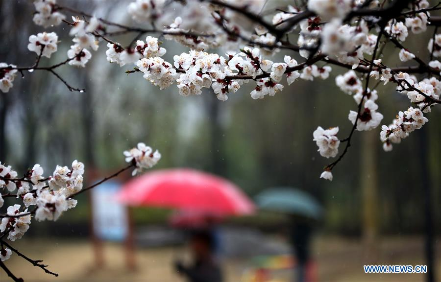 Flowers bloom in rain in east China's Shandong