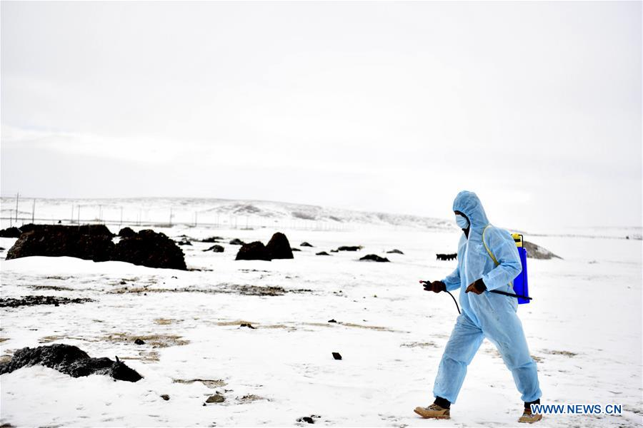 Qinghai 's Yushu takes relief measures after number of blizzards