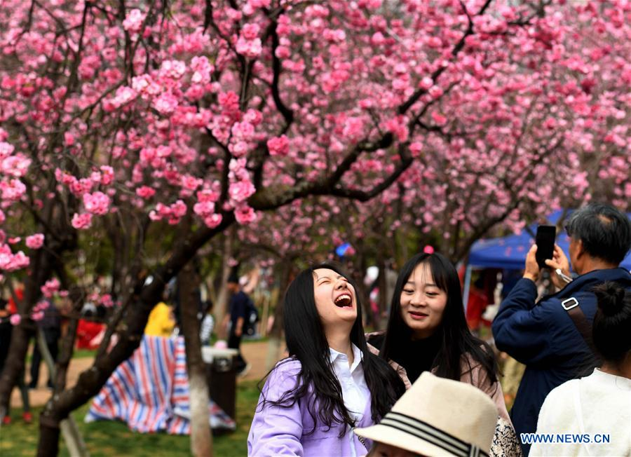 People enjoy cherry blossoms in SW China's Kunming
