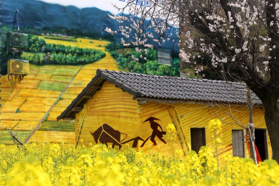Farmhouses spring with color in rural Hubei