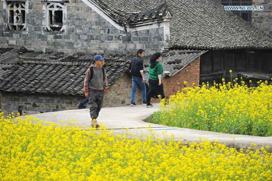 In pics: cole flower fields in southwest China's Guizhou