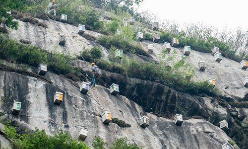 Villagers, experts build cliffside homes in Beijing for endangered bee species