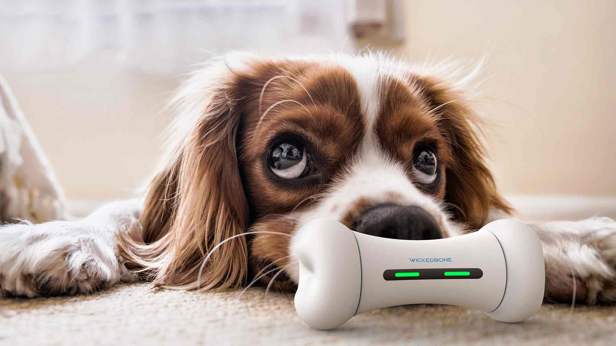 Smart new toy for puppies