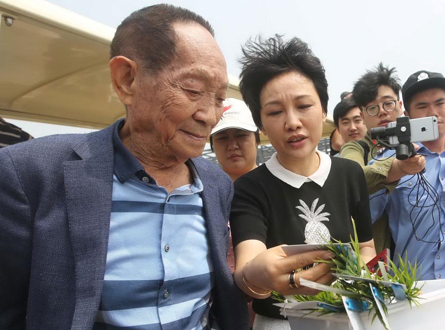 Test planting of saltwater rice begins