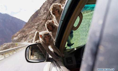 Tibet Dargo gorge, habitat for wild monkeys
