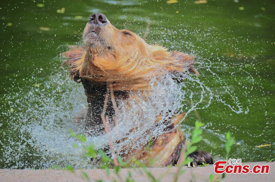 Animals in battle against hot summer