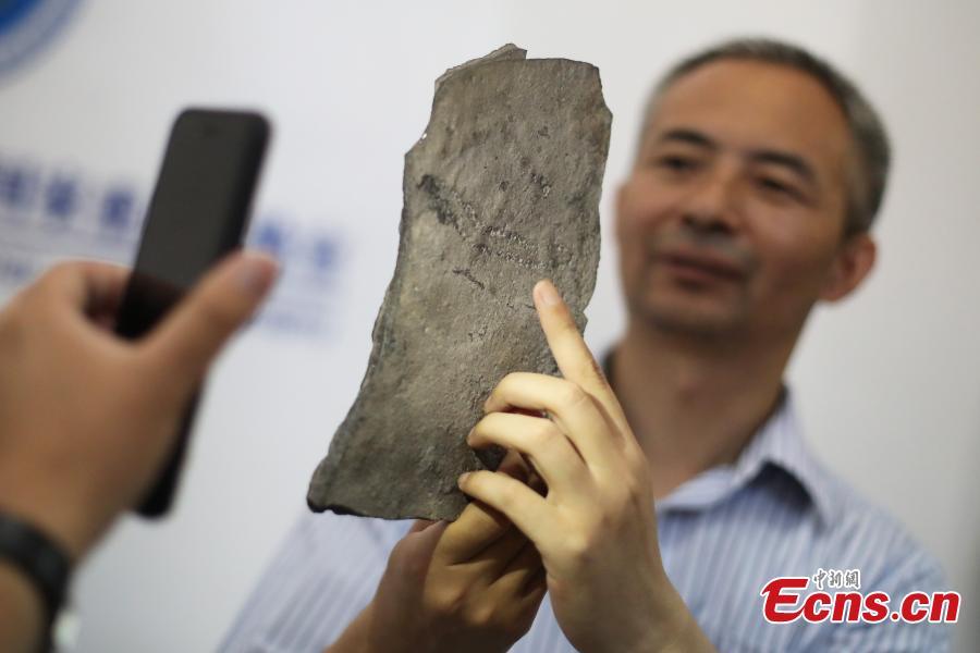 World's oldest animal footprints discovered