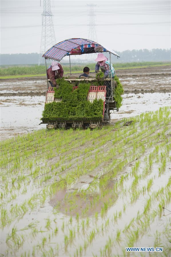 Farmers busy with farm work during planting season in China's Jiangsu