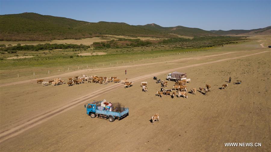 Pic story: tradition for nomadic herdsman to transfer livestocks in summer
