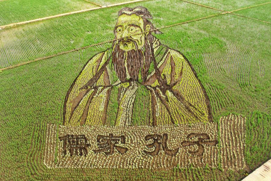 3D paddy field 'art' a highlight of Shenyang