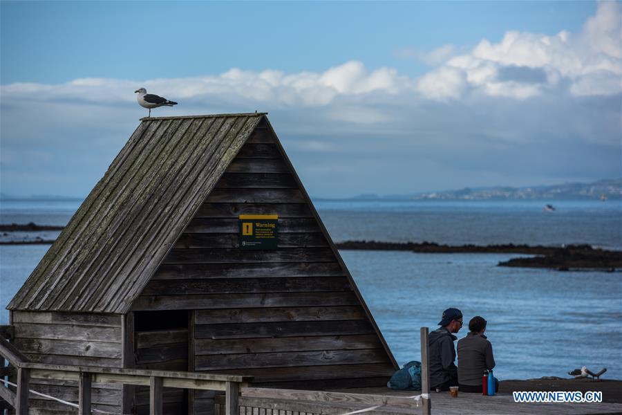 Scenery of Rangitoto Island, New Zealand
