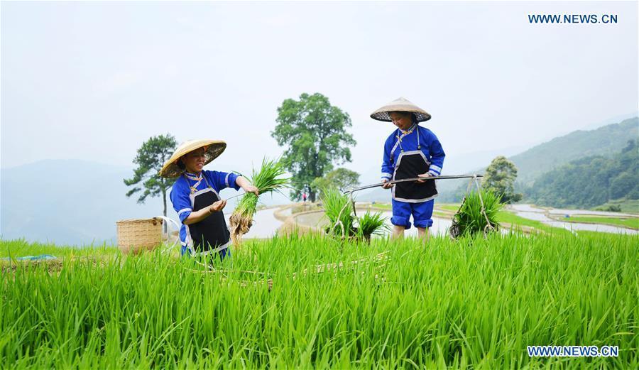 Farmers work in terraced fields in S China's Guangxi