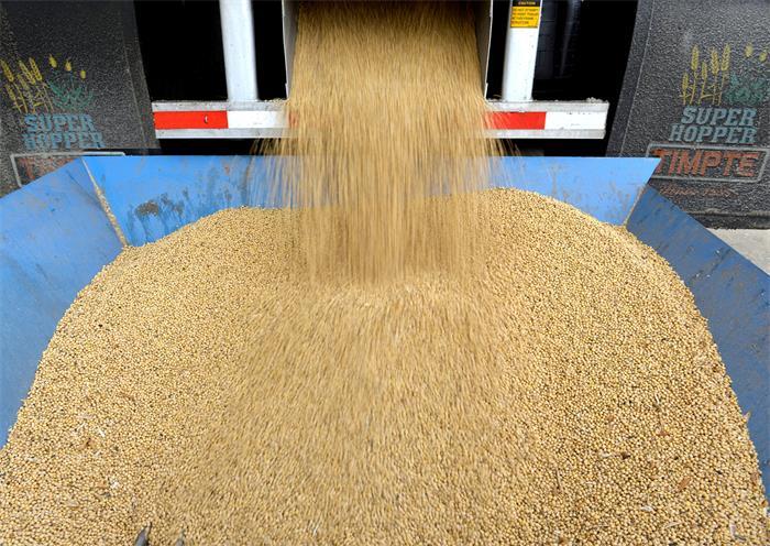 Tariff dispute ensnarls US soybean producers