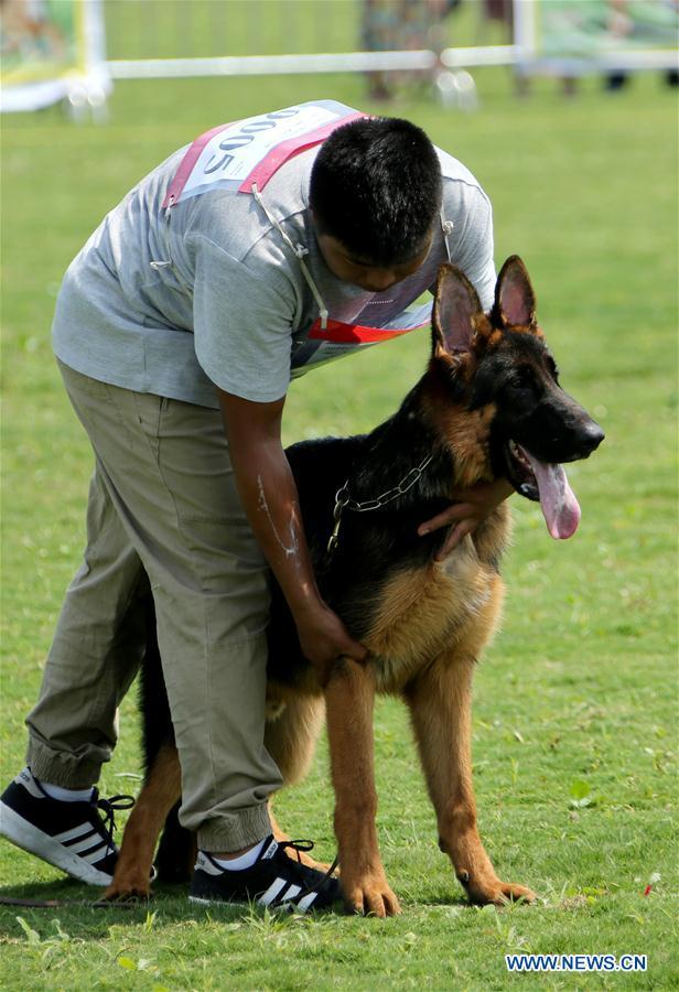 2018 German Shepherd Dogs Show opens in Shandong