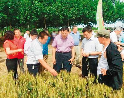 China's research of hybrid wheat leads the world