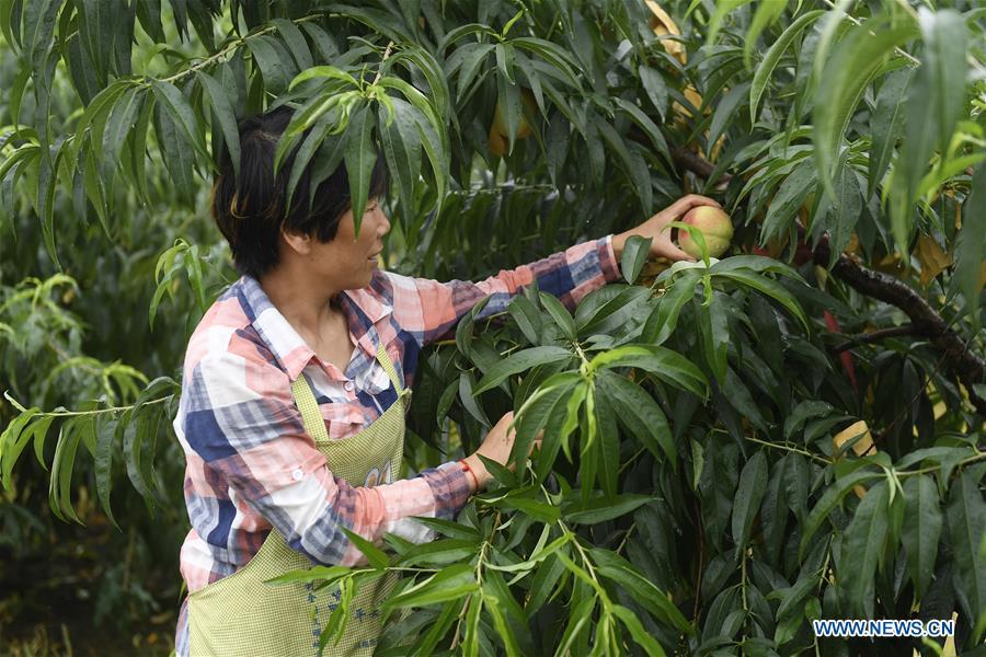 Peach fair held in E China's Zhejiang