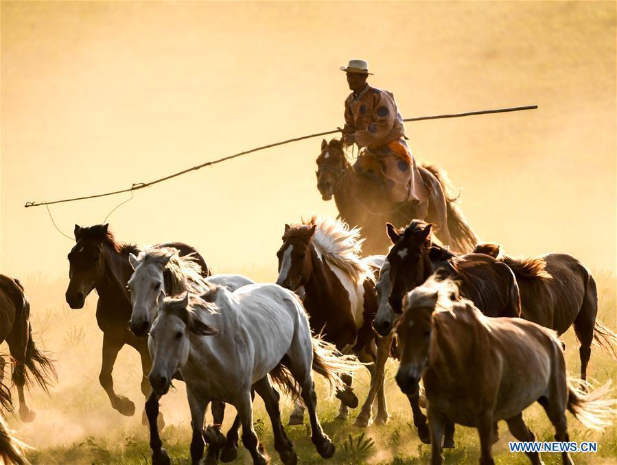 Herdsmen drive horses on grassland in Chifeng City, N China