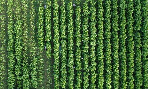 Silkworm breeding base in east China's Zhejiang