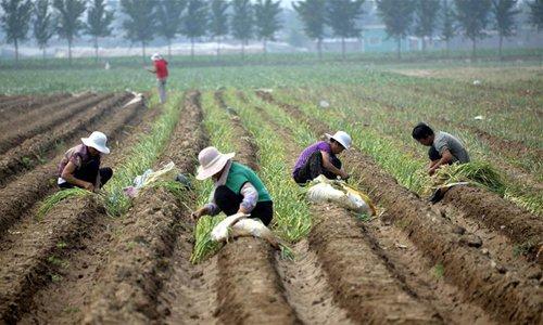 Summer farm work across China