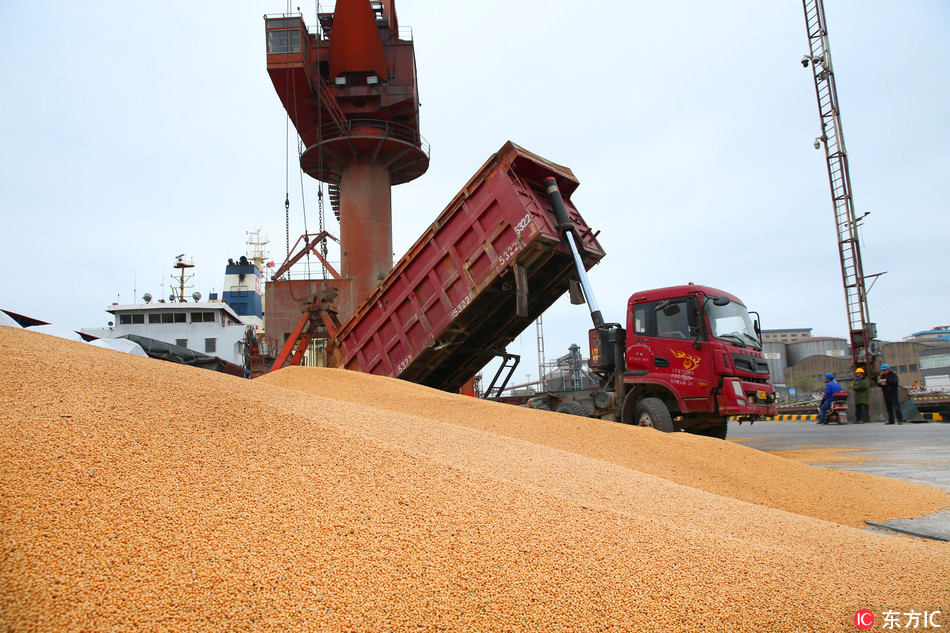 S. America outpaces the US in supplying soybeans to China: Sinograin