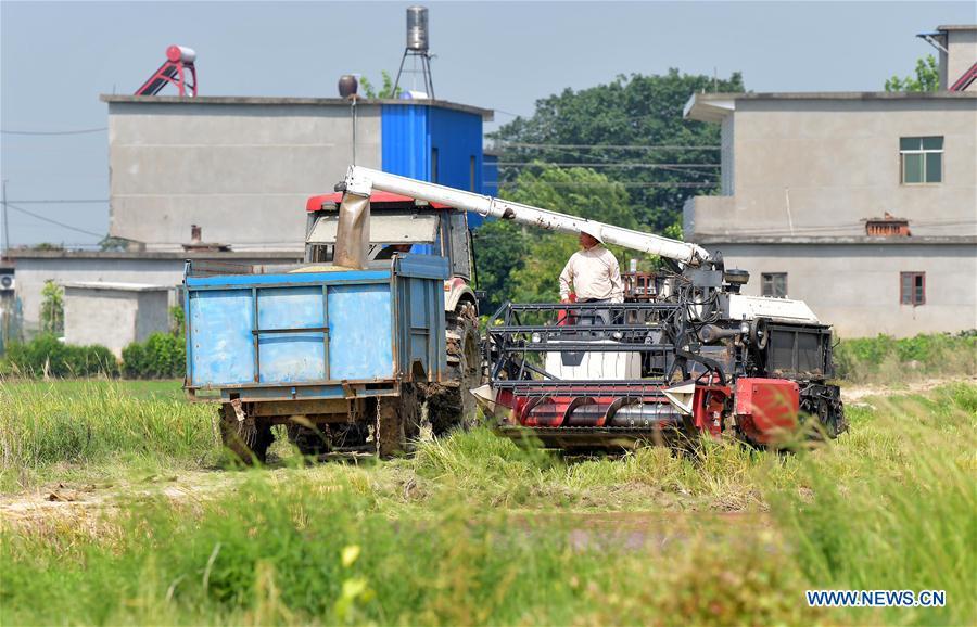 Early rice reaped in E China's Jiangxi