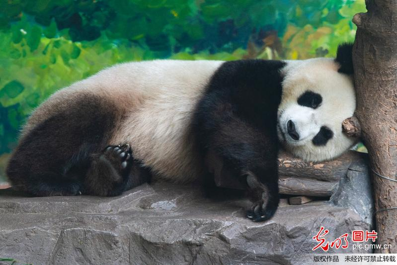 Animals relieve from summer heat in China's Jiangsu