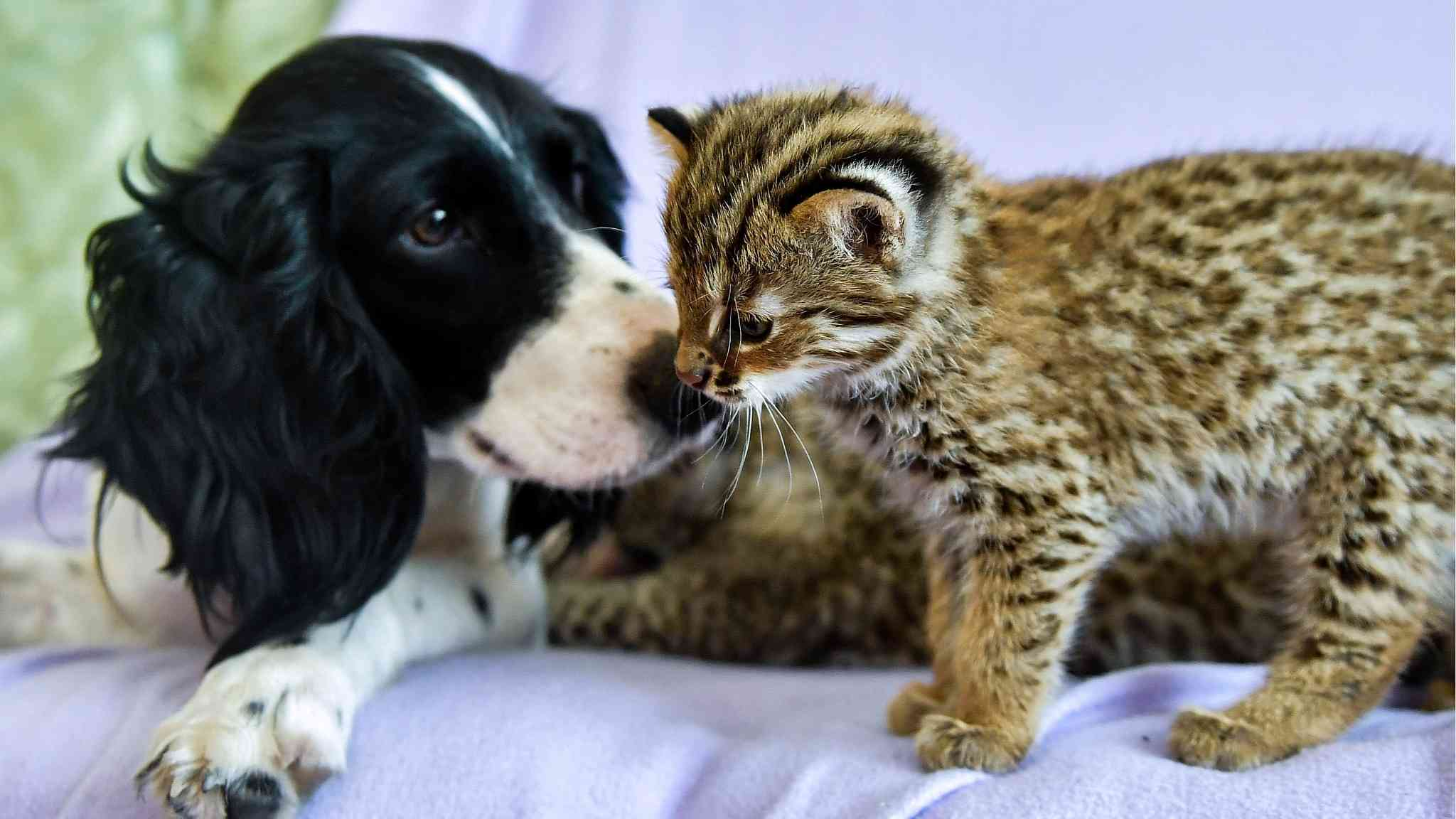 Mother's love! Dog adopts a leopard cub and a kitten