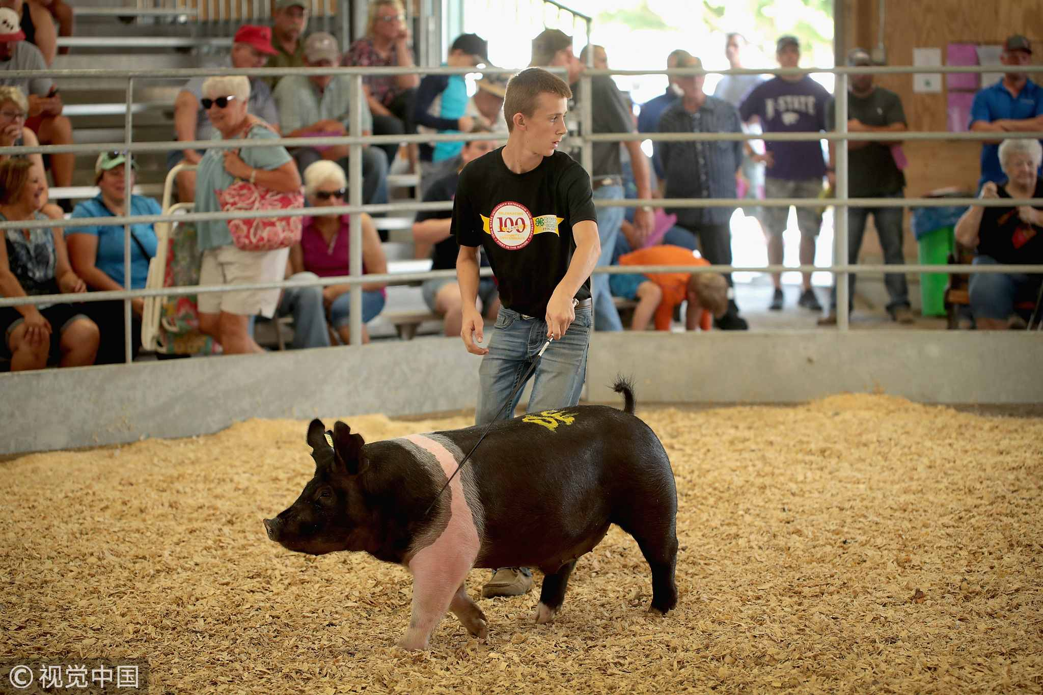 A contestant shows a hog during competition at the Iowa County Fair on July 13, 2018 in Marengo, Iowa. Farmers in Iowa and the rest of the country, who are already faced with decade-low profits, are bracing for the impact a trade war with China may have on their bottom line going forward. [Photo: VCG]