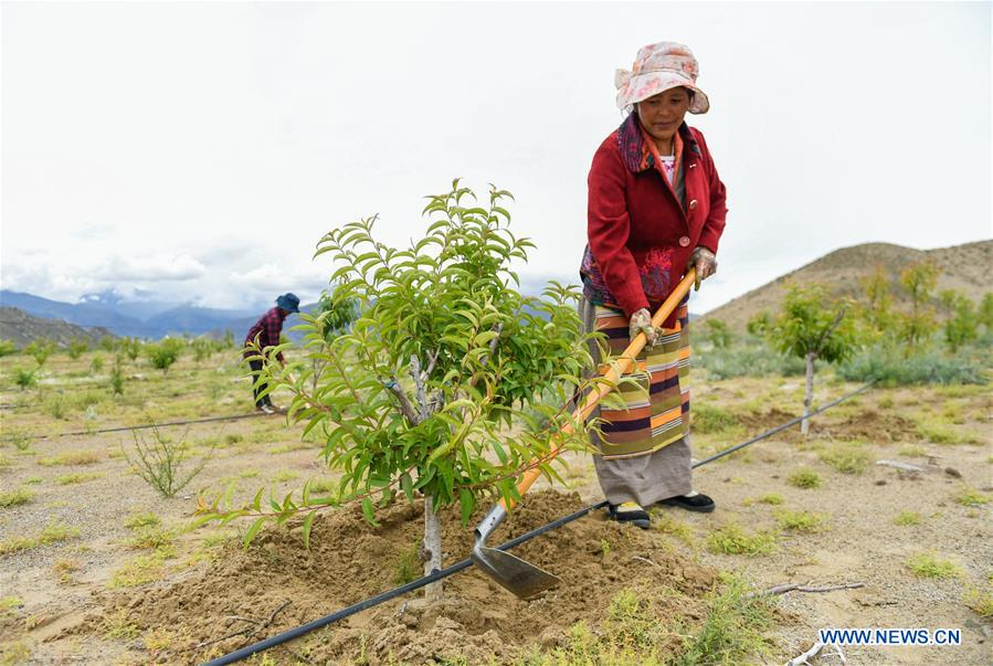 Green industry developed to boost local economy in SW China's Tibet