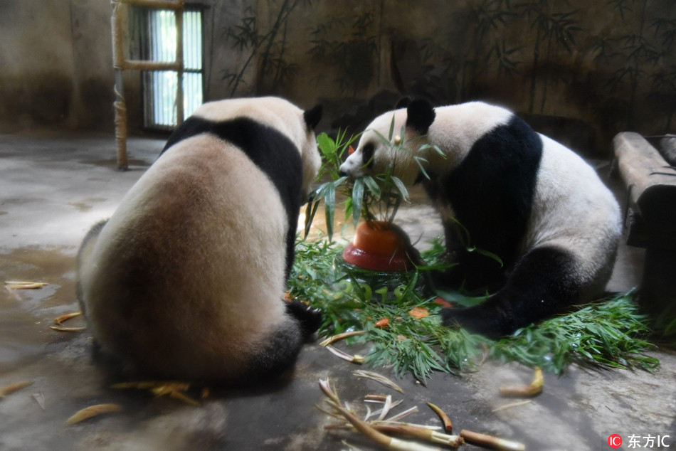 Giant pandas celebrate their fourth birthday in Hangzhou