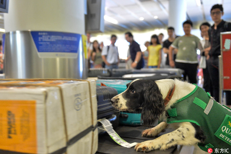 Airport's cutest 'special agents' help with inspections