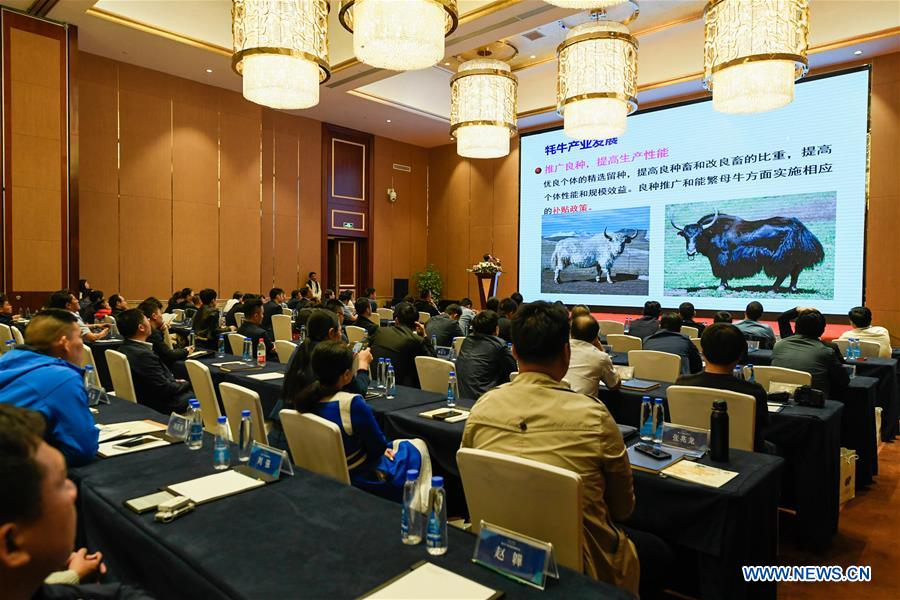 1st Tibet Yak Industry Development Forum held in Lhasa